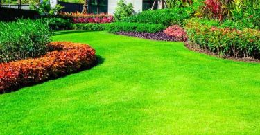 Photo that will help you Create the Perfect Lawn