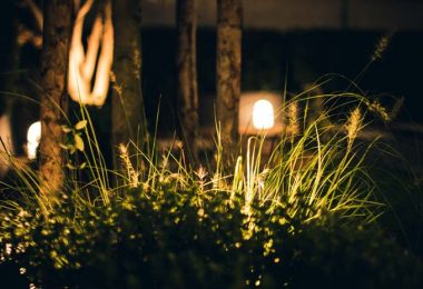 Photo of a garden with lighting