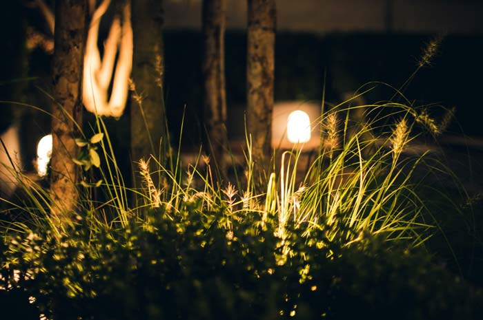 Photo of a garden with lighting - Tips for organizing your garden