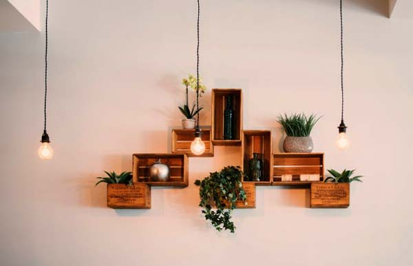 Photo of interior plants that can help you personalize your interior
